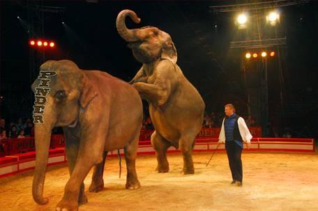 Elephants pinder